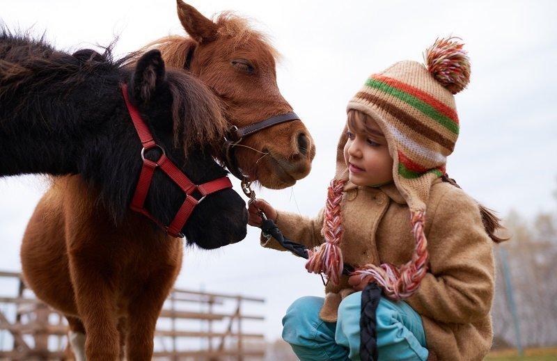 טיפול באמצעות בעלי חיים סוסים